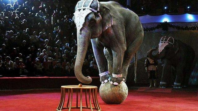 В Україні планують заборонити експлуатацію диких тварин у цирках