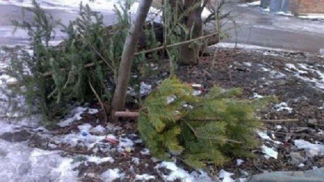 Сьогодні у Львові забиратимуть на утилізацію використані ялинки