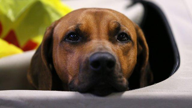 У львівському виставковому комплексі провели міжнародну виставку собак