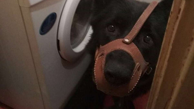 Львів'янка заявила про побиття та зґвалтування, а потім нацькувала на патрульних собаку