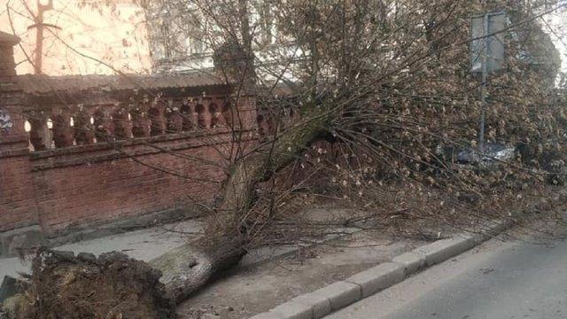 У Львові через сильні пориви вітру впало декілька дерев