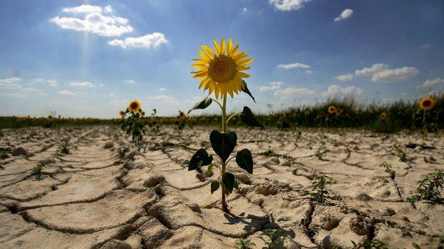 Через глобальне потепління агрокліматичні зони України посунулись на 200 км