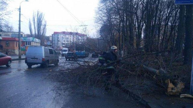 У Вінниці через падіння дерева загинула 11-річна дівчинка