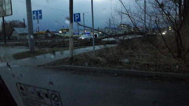 На Львівщині оголосили штормове попередження через шквальний вітер