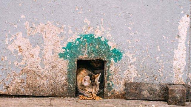 В Києві волонтери встановлюють будиночки для безпритульних котів
