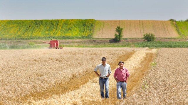 Як збільшити прибутковість, вирощуючи сільгосппродукцію
