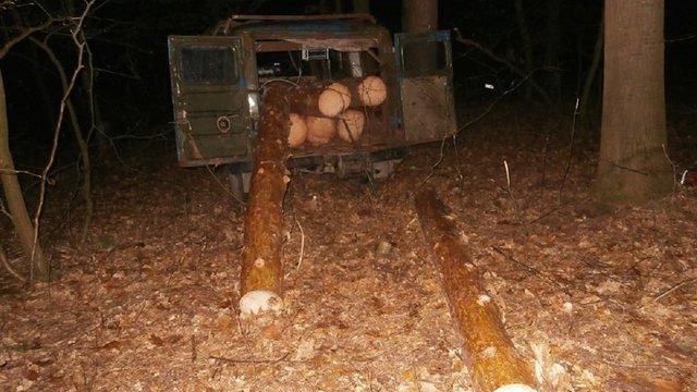 На Бродівщині за незаконне вирубування дерев у національному парку затримали місцевого депутата