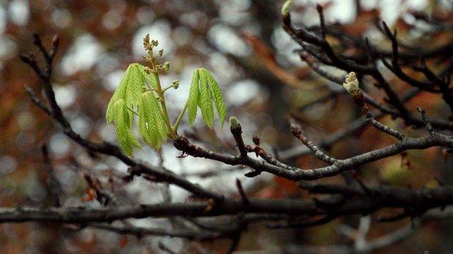 У найближчі дні синоптики прогнозують суттєве потепління