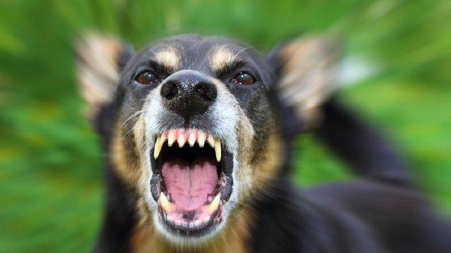На Стрийщині запровадили карантин через випадок сказу в собаки