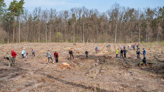 На Львівщині встановили національний рекорд з висадки дерев