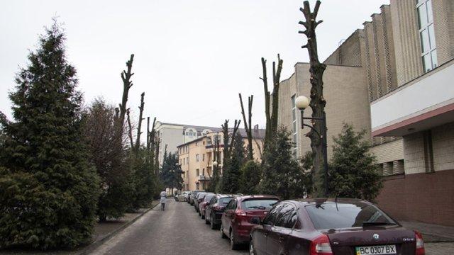 Петиція проти «варварської» обрізки дерев у Львові за добу набрала необхідні 500 голосів
