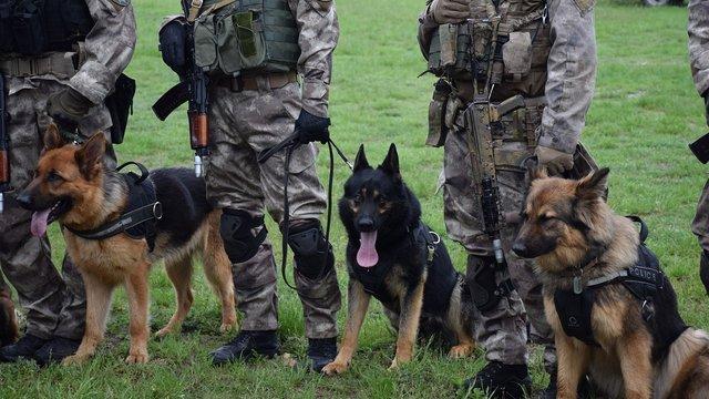 У кінологічному центрі на Львівщині підготували вісьмох собак-спецпризначенців