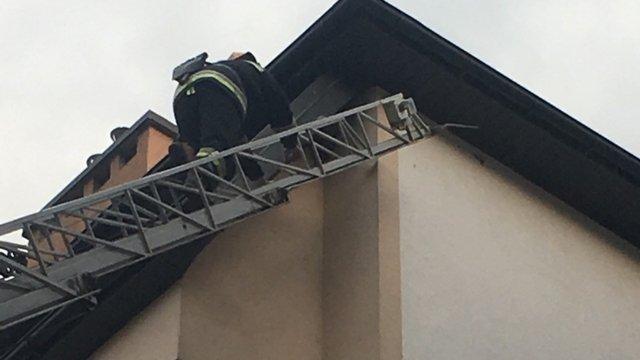 Львівських рятувальників викликали на порятунок ластівки, що заплуталась під дахом будинку