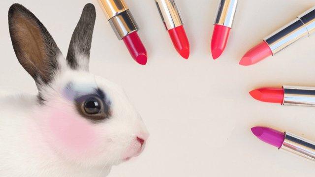 МОЗ опублікувало проект постанови про заборону тестування косметики на тваринах