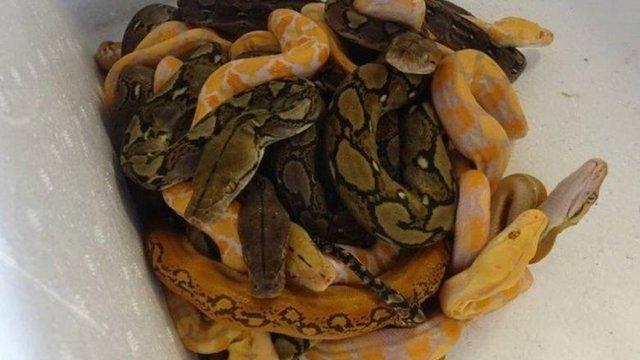 23-річний українець намагався провезти до Польщі 166 змій та ящірок