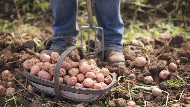 Україна побила попередній рекорд з імпорту овочів