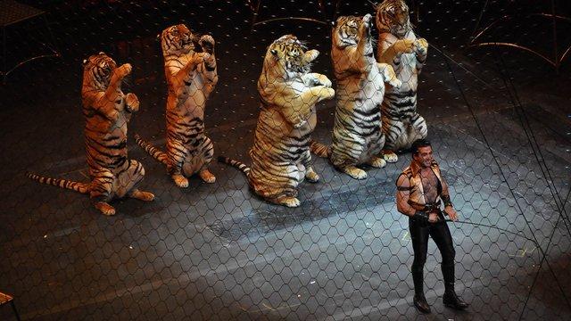 Мерія  вирішила заборонити використання тварин у львівському цирку