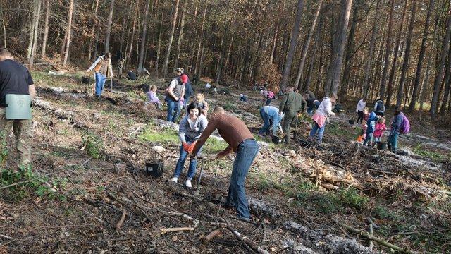За один день у лісах Львівщини посадили понад 65 тисяч дерев