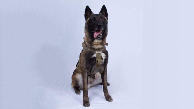 Трамп показав фото службового собаки, який постраждав при ліквідації ватажка ІД
