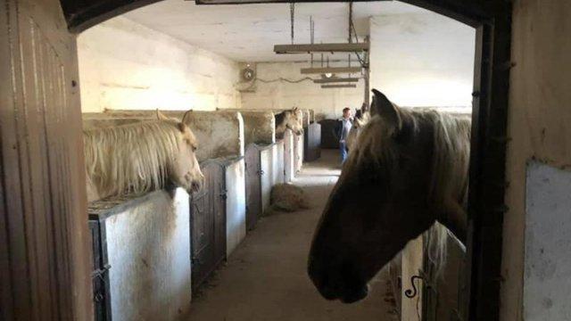 Комісія перевірила умови утримання коней львівською компанією «Каретний двір»