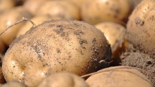 У жовтні Україна побила попередній рекорд з імпорту картоплі
