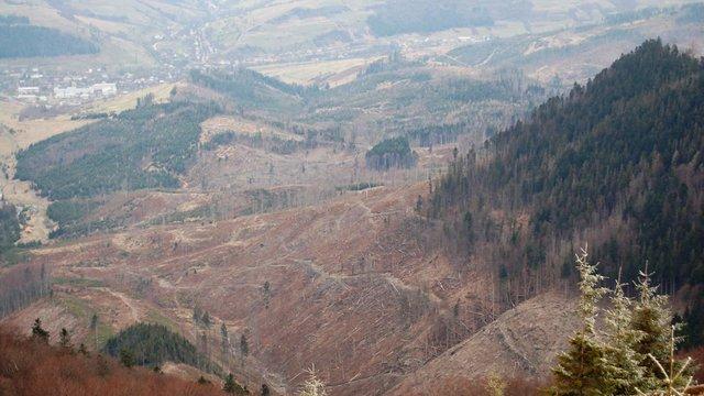 Під виглядом збереження лісів Верховна Рада спростила вирубку Карпат, – екологи