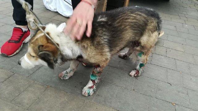 МВС нагородить спецпризначенця, який врятував собаку від чиновника-шкуродера