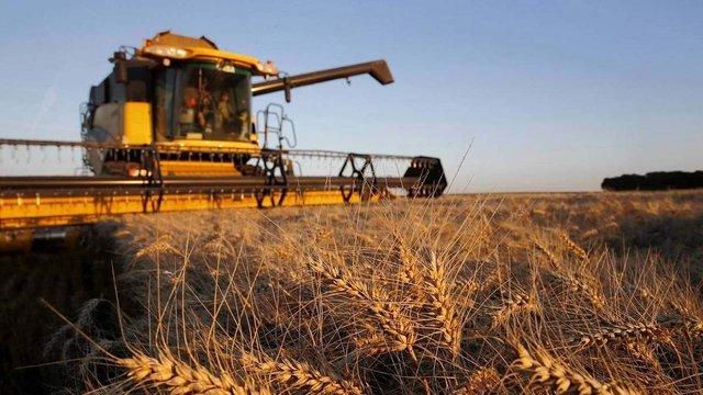 Україна встановила новий історичний рекорд із врожаю зернових