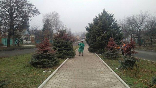Ялинки у центральному парку Львова пофарбують у червоний колір