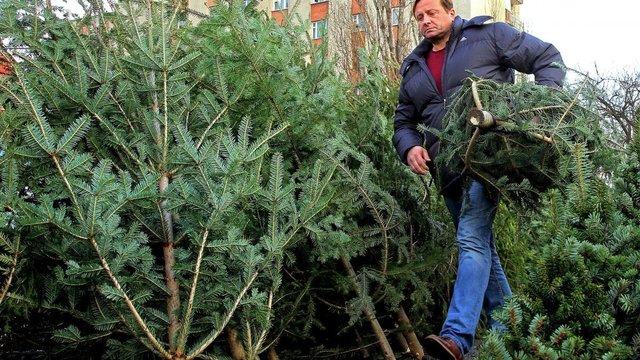 ПЦУ закликала відмовитися від зрубаних ялинок на Новий рік та Різдво