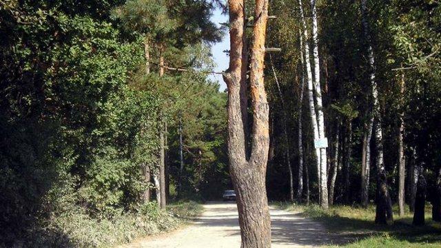 Поблизу Львова створили лісовий заказник площею 42 гектари