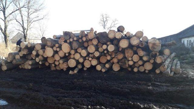 На приватній пилорамі у Старосамбірському районі виявили незаконно зрубані дерева