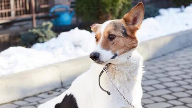 Львів'яни можуть безкоштовно прочіпувати домашніх собак