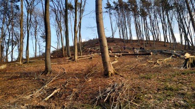 У лісі біля Винниківського озера масово вирубують дерева