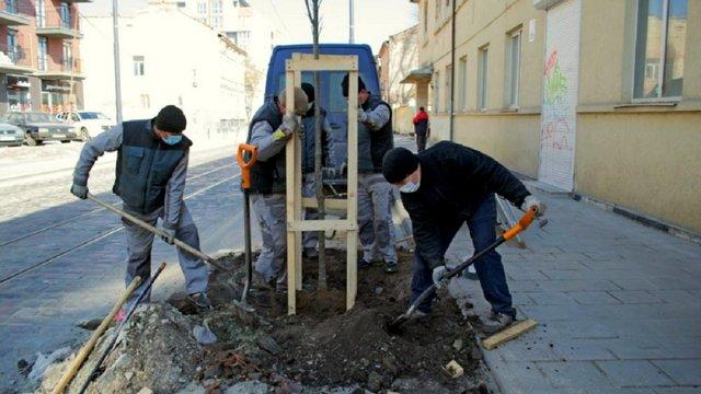 У Львові цього тижня висадять понад 400 дерев