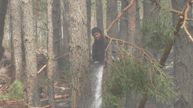 Рятувальники локалізували масштабні лісові пожежі на Житомирщині