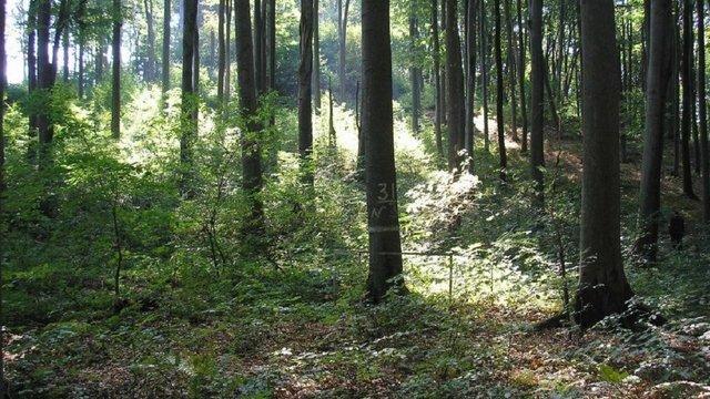 Верховна Рада ухвалила закон про інвентаризацію лісів