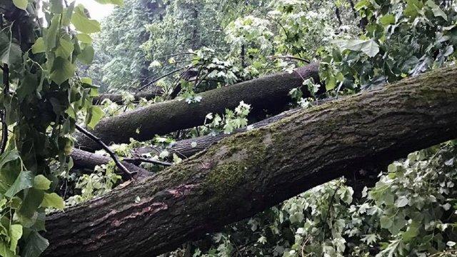 Вчорашня буря повалила близько 50 дерев у парку на Високому Замку