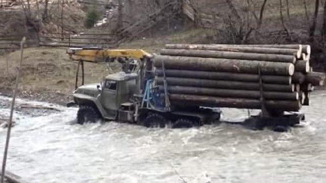 Держлісагентство заперечило зв'язок між вирубкою лісів у Карпатах і повенями