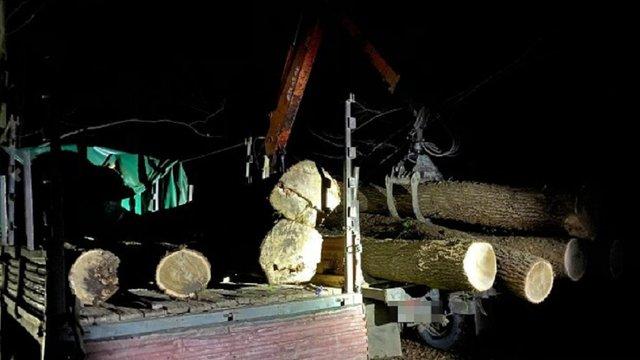 Впродовж двох місяців на Львівщині незаконно вирубали дубів на 1,2 млн грн