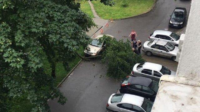У Львові внаслідок падіння дерева постраждала пенсіонерка