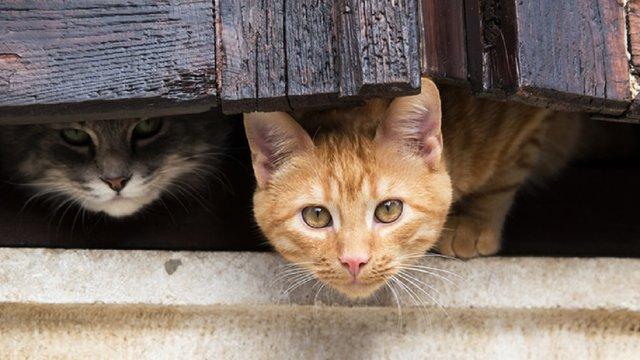 Ветеринари фонду Four Paws безкоштовно стерилізуватимуть вуличних котів Києва