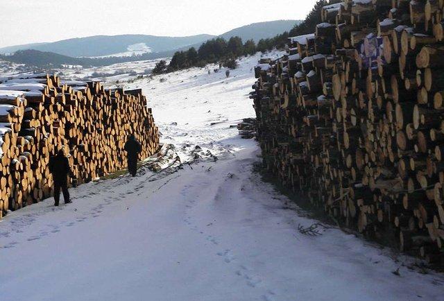 Карпатський ліс на експорт
