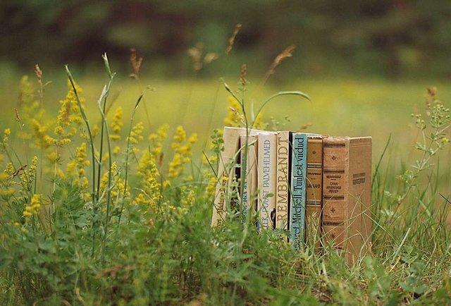 Літо, море, книжка