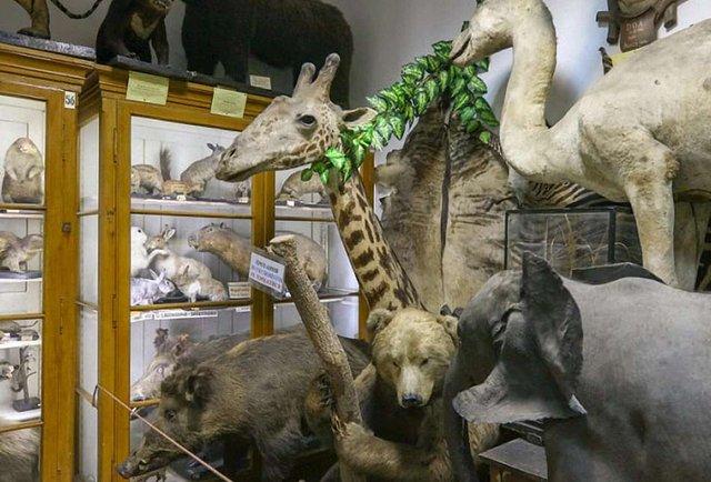 Найбільш таємничий музей Львова
