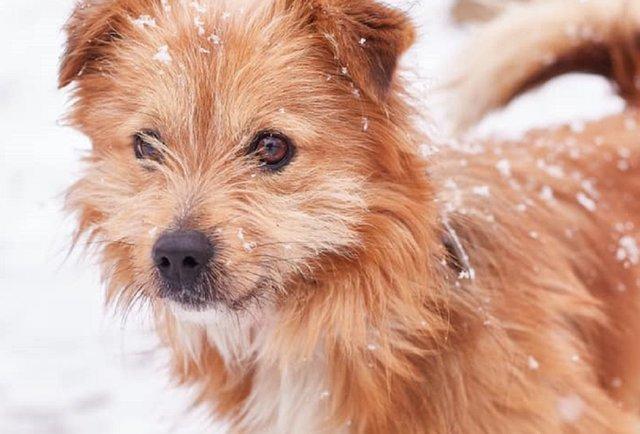 Зворушлива Люся та інші собаки мрії