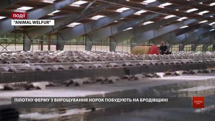 Пілотну ферму з вирощування норок побудують на Бродівщині