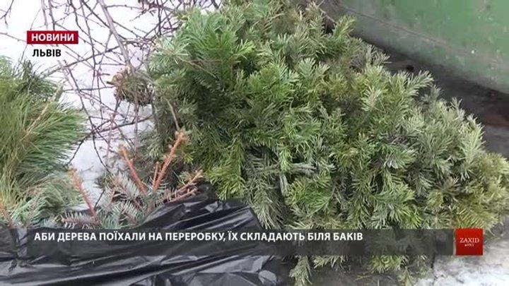 Львів'ян закликають відповідально утилізувати новорічні ялинки