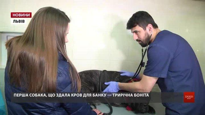 У Львові запрацював перший в Західній Україні банк крові для собак