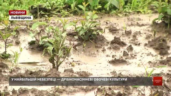 Дощі на Львівщині загрожують урожаю